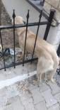Demir Parmaklıklara Sıkışan Köpeği İtfaiye Kurtardı
