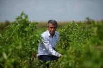 Gübre Ve İlâca Yüzde Yüz Zam Geldi, Çiftçi İsyan Etti