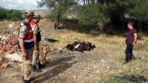 PİKNİK ALANI - Keçilerin Nakliye Esnasında Telef Olduğu İddiası