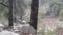 Mersin'de Araç Uçuruma Yuvarlandı, Sürücü Ağır Yaralandı