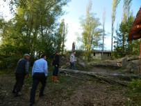 ENVER YıLMAZ - Posof'ta Fırtına Ağaçları Devirdi