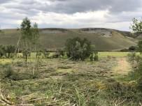 BARAJ GÖLÜ - Sular Altına Kalacak Ağaçlar Kesiliyor