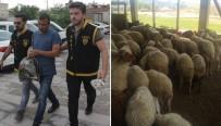 MILLI PIYANGO - Vatandaşları Dolandırıp Çiftlik Kurmuş