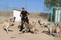 Yerli Ve Milli Koruma Köpeği 'Kangal'