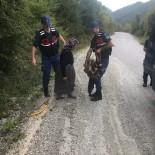 Jandarma, Sırtında Odun Taşıyan Yaşlı Kadına Yardım Etti