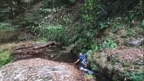 Tarzana Özendi, Sarmaşık Kopunca Suya Düştü