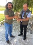 VAN YÜZÜNCÜ YıL ÜNIVERSITESI - Van'da Yaralı Kuşlar Tedavi Altına Alındı