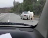 Vicdansızlık Açıklaması Atı Otomobilin Arkasına Bağladı