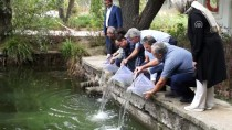 ANKARA BÜYÜKŞEHİR BELEDİYESİ - Karagöl'e 5 Bin Abant Alası Bırakıldı