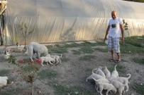 YUMURTA - (Özel) İnsanlardan Sıkıldı Hobi Çiftliği Kurdu