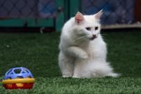 (Özel) Van Kedi Villası'nda Beş Yıldızlı Konfor