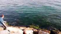 Amatör Balıkçının Oltasına İğneli Vatoz Takıldı