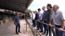 KAMULAŞTIRMA - Antandros Antik Kenti'ne Teknik Gezi Düzenlendi
