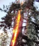 YILDIRIM DÜŞMESİ - Aydın Ve Muğla'da Yıldırım Yangınları Artış Gösterdi