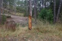 Çıra İçin Oyulan Ağaç Tedavi Edildi