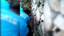 Duvar Arasına Sıkışan Yavru Kedi Kurtarıldı