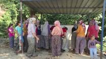 ÇAYAĞZı - İzmir'in 'Susuz Mahallesinde' eşeklerle su taşınıyor