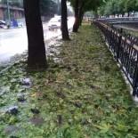 KASKO SİGORTASI - Kastamonu'da Dolu Yağışı Kuşları Da Telef Etti