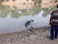 Nehre Düşen Atı İtfaiye Ekipleri Kurtardı