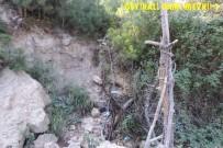Orman Bölge Müdürlüğü'nden Zeytin Yaylası Açıklaması