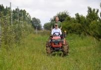 YUSUF DEMIR - Rektör Bilgiç Traktörle Hasat Yaptı