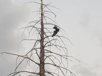 Ağaçta Asılı Kalan Kargayı İtfaiye Kurtardı