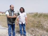 Boş Arazide Halsiz Bir Halde Bulunan Tavus Kuşu Tedavi Altına Alındı