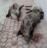 Domuzların Kanlar İçinde Sergilenmesine Hayvanseverlerden Tepki