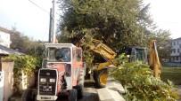 Düzce'de Ağaçlara Bakım Yapıldı