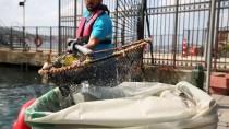 AMBALAJ ATIKLARI - İstanbul'un Kıyılarından 12 Bin Metreküp Çöp Toplandı