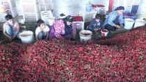 MEVSİMLİK İŞÇİ - Mevsimlik İşçilerin 'Acı' Hayatı