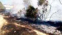 MAKİLİK ALAN - Aydın'da Ormanlık Alan Yandı