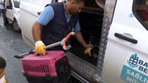 (Özel) Nesli Tükenmekte Hint Balıkçıl Kuşu, Başakşehir'de Bir Eve Girdi