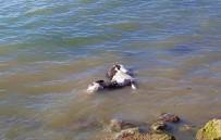 MÜREFTE - Denizde Eşek Ölüsü Bulundu