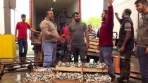 İŞADAMLARI - Ege'de Sardalya Bereketi