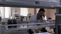 BILIM ADAMLARı - Fındık Atıklarından Kemoterapi İlacı Etken Maddesi