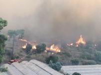 KARAÖZ - Kumluca'da Orman Yangınında Seralar Zarar Gördü