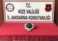 GÖZALTI İŞLEMİ - Rize'de Kaçakçılara Geçit Yok