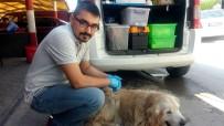 Yaralı Köpeğe Esnaf Sahip Çıktı, Veteriner Tedavisini Yaptı