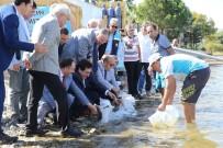 500 Bin Balık İznik Gölü İle Buluştu