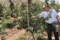 Başkan Öztürk Açıklaması 'Yahyalı'da Elma Üretimi Modernleşmeli'