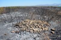 Didim'deki Yangın Faciasının Boyutu Gündüz Ortaya Çıktı