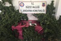 JANDARMA ALAY KOMUTANLIĞI - Düzce'de Uyuşturucu Operasyonu Açıklaması 2 Tutuklu