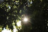 METEOROLOJI - Eskişehir Ve Çevresinde Hava Durumu