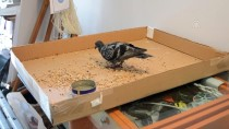 Lüleburgaz'da Güvercinle Esnafın Dostluğu