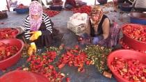 KIZ ÖĞRENCİLER - Şanlıurfalı Kadınların 'İsot' Mesaisi