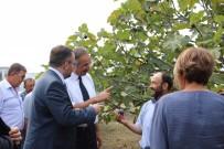 AVRUPA KOMISYONU - Tarım A.Ş. Sayesinde Çiftçi Kazanacak