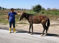 REHABILITASYON - Yaralı Ata Aydın Büyükşehir Sahip Çıktı