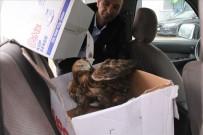 Yaralı Şahin'in Yardımına Genç Veteriner Koştu