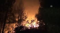 ORMAN İŞLETME MÜDÜRÜ - Adana'daki Orman Yangını
